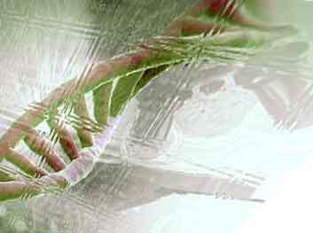 Молекула ДНК. Генетические исследования