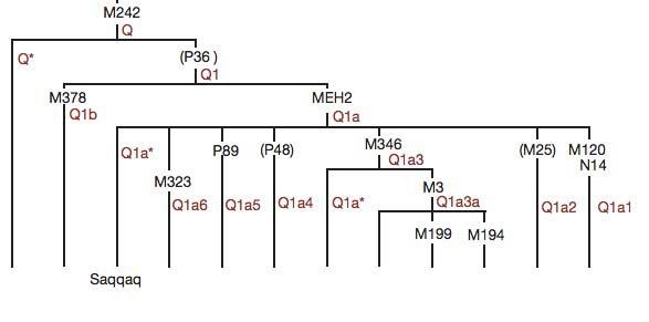 Дерево для гаплогруппы Q
