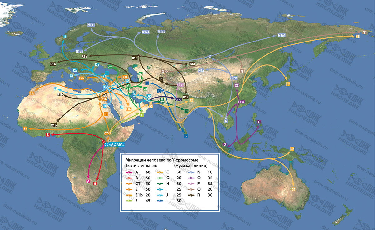 Карта расселения основных Y-гаплогрупп по континентам