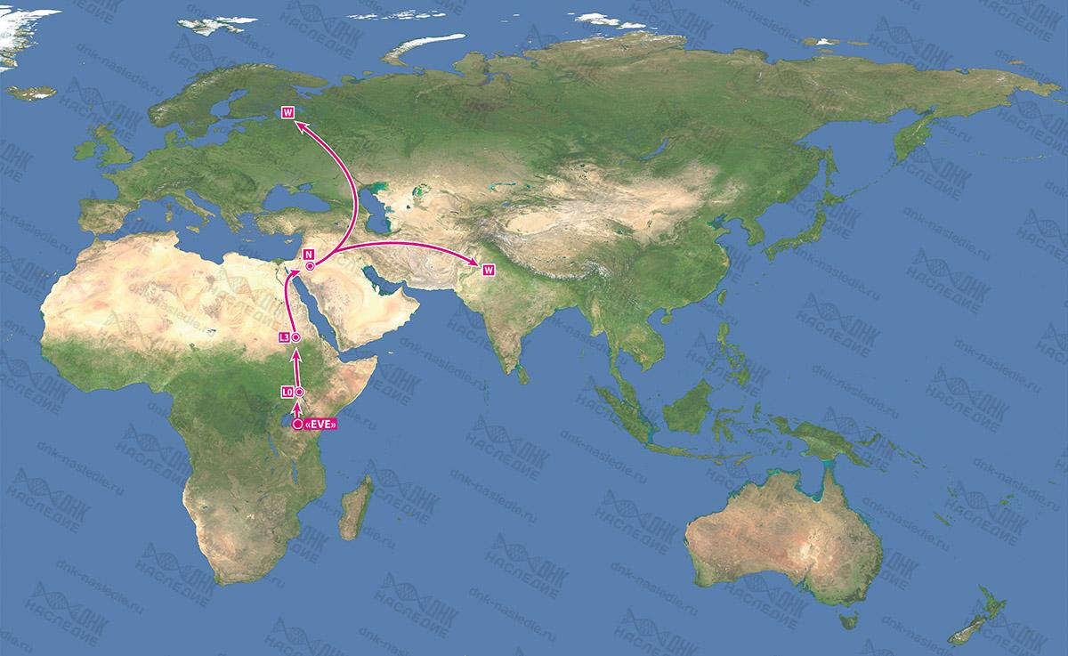 Миграция гаплогруппы W